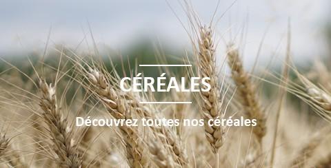 Vente de céréales BIO